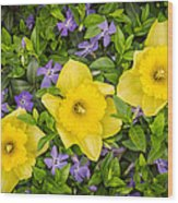 Three Daffodils In Blooming Periwinkle Wood Print