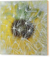 Three Dandelions In A Line Wood Print