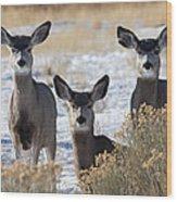 Three Deer Wood Print