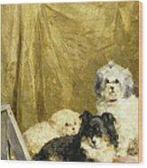 Three Dogs Wood Print