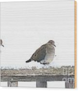 Three Doves On A Railing Wood Print