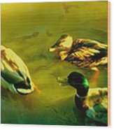 Three Ducks On Golden Pond Wood Print
