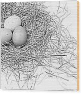 Three Eggs In A Nest Black And White Wood Print