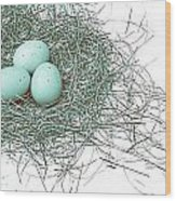Three Eggs In A Nest Teal Brown Wood Print