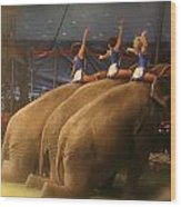 Three Elephants At The Circus Wood Print