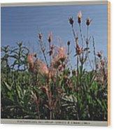 three flowered avens - Geum triflorum - 12MA30-1 Wood Print
