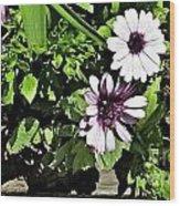 Three Flowers Wood Print by Claudette Bujold-Poirier