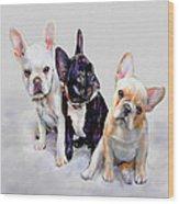 Three Frenchie Puppies Wood Print by Jane Schnetlage