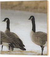 Three Geese Abstract Wood Print by Dave Dilli