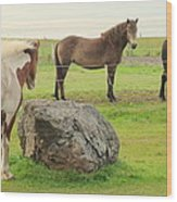 There Were Three Horsegirls And One Big Gray Stone  Wood Print