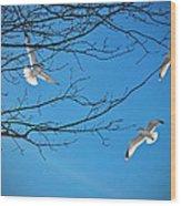 Three Gulls Wood Print
