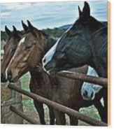 Three Horses Waiting For Carrots Wood Print
