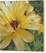 Three Insects And A Flower Wood Print