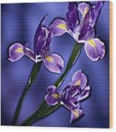 Three Iris Xiphium Wood Print