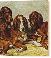 Three Irish Red Setters Wood Print by John Emms