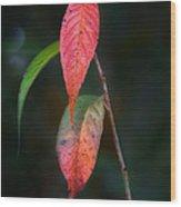 Three Leaves Of Fall Wood Print