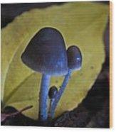 Three Little Mushrooms Wood Print