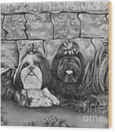 Three Little Shih Tzus Wood Print