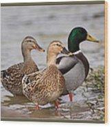 Three Mallards Card - Ducks Wood Print