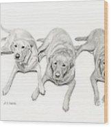 Three Of A Kind Wood Print
