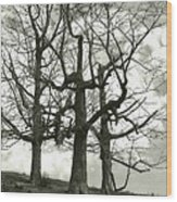Three On A Hill Wood Print