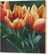 Three Orange And Red Tulips Wood Print