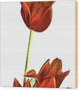 Three Orange Red Tulips Wood Print