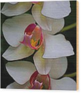 Three Orchids Wood Print
