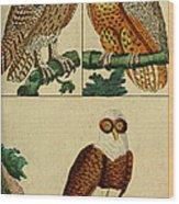 Three Owls Wood Print
