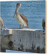 Three Pelicans Wood Print