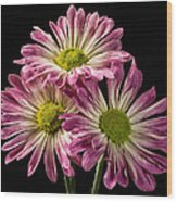 Three Pink Flowers Wood Print