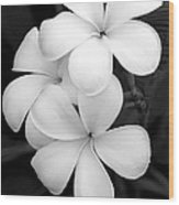 Three Plumeria Flowers In Black And White Wood Print