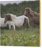 Three Ponies Wood Print
