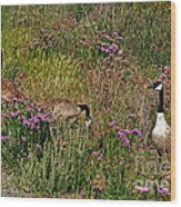 Three Quiet Canada Geese Wood Print by Susan Wiedmann