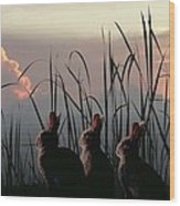 Three Rabbits In The Setting Sun Wood Print