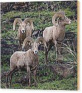 Three Rams Wood Print