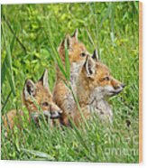 Three Red Fox Pups Wood Print