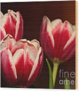 Three Red Tulips Wood Print
