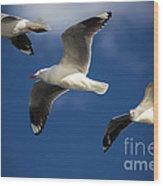 Three Silver Gulls In Flight Wood Print by Avalon Fine Art Photography