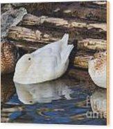 Three Sleeping Ducks Wood Print