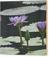 Three Stages Of Blue Bloom Wood Print