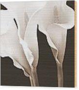 Three Tall Calla Lilies In Sepia Wood Print