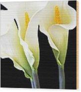 Three Tall Calla Lilies Wood Print