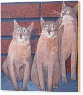 Three Tan Cats Wood Print