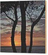 Three Trees At Sunset  Wood Print