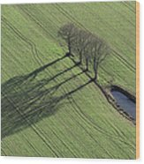 Three Trees, Montaigu Wood Print