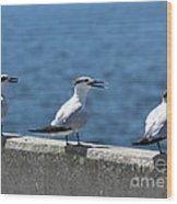Three Turning Terns Wood Print