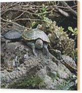 Three Turtles Wood Print