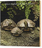 Three Turtles Wood Print