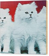 Three White Cats Wood Print